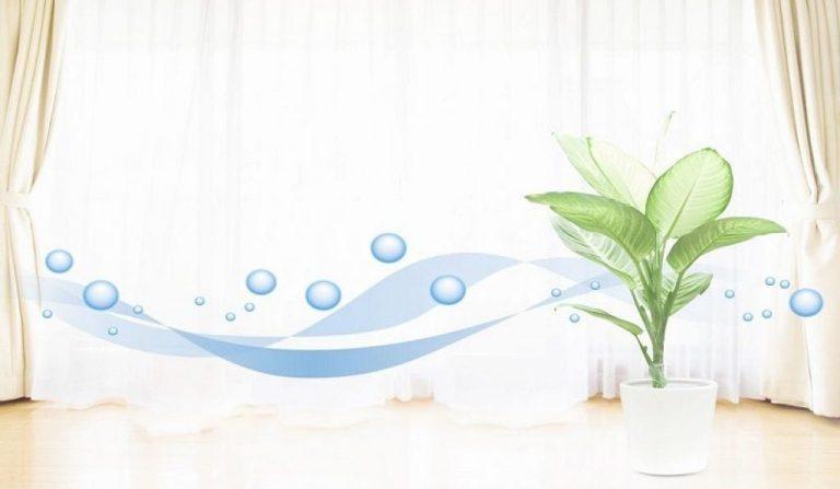air purifier reviews